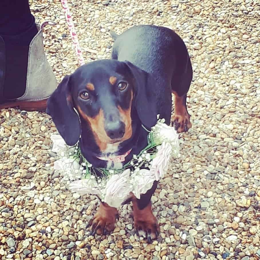 Copdock-Hall-wedding dog