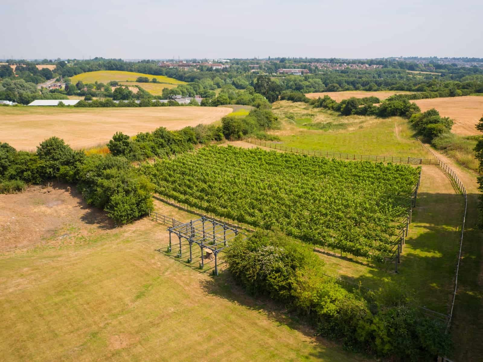 Copdock Hall vineyard from drone