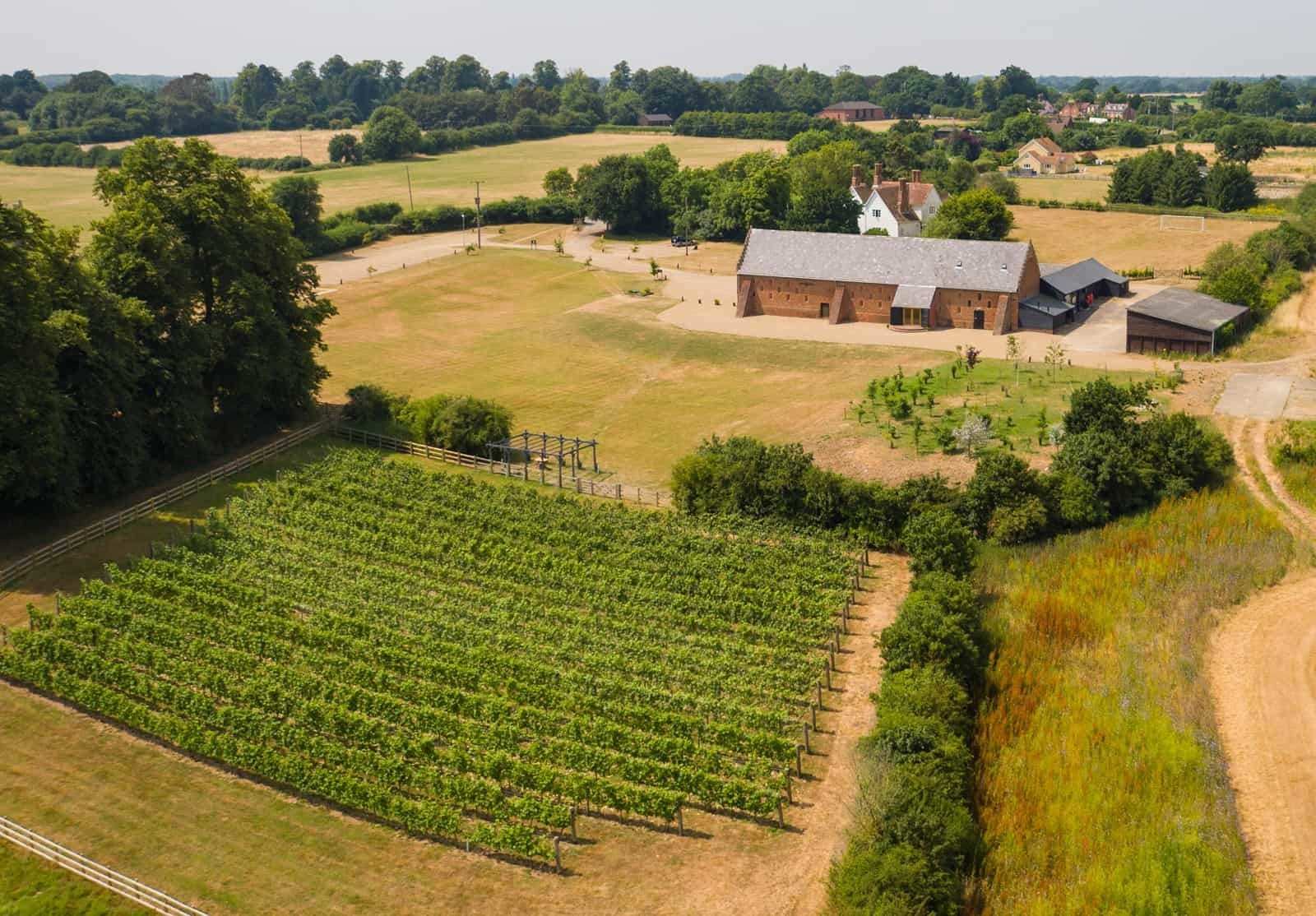 Vineyard at Copdock Hall Suffolk