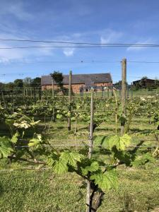 The darling buds of...June 1 copdock hall vineyard